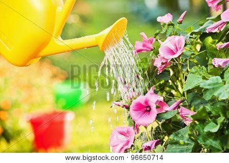 Watering flowers in garden outdoors