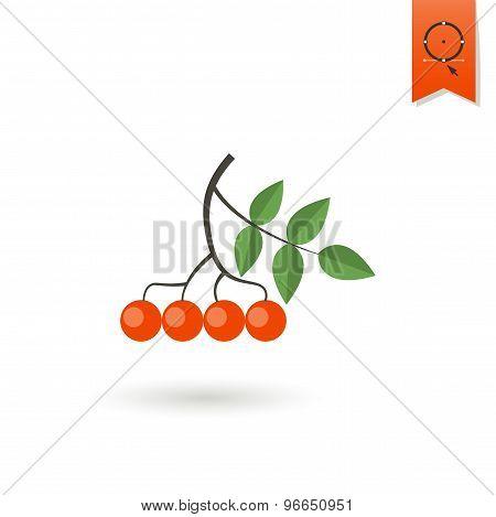 Berries Bunch of Viburnum