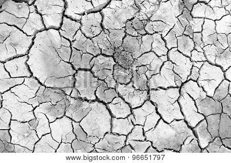 Dry Land. Cracked Ground Background And Texture.