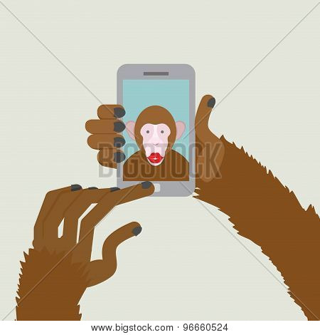 Monkey Makes Selfie. Animal Clicks To Your Smartphone With Your Fingers. African Animal Photographs