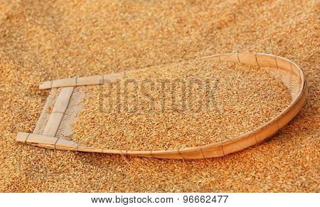 Cleaning Of Golden Paddy Seeds