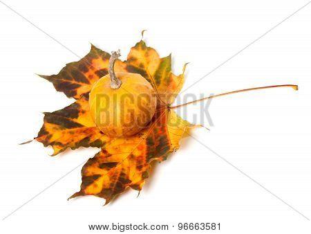 Small Decorative Pumpkin On Multicolor Autumn Maple-leaf