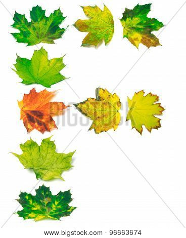 Letter F Composed Of Yellowed Maple Leafs