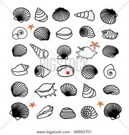 Sea shells and starfish set. Vector illustration. Black and white.
