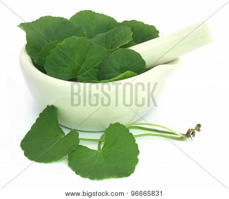 Thankuni Leaves With Mortar And Pestle