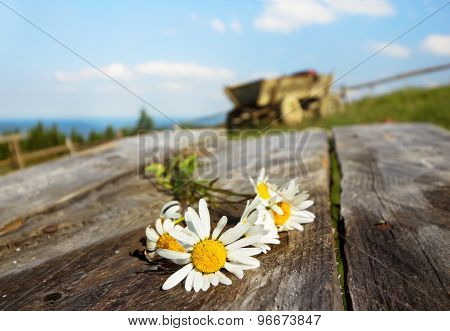 Bouquet Of Daisies On Rustic Table