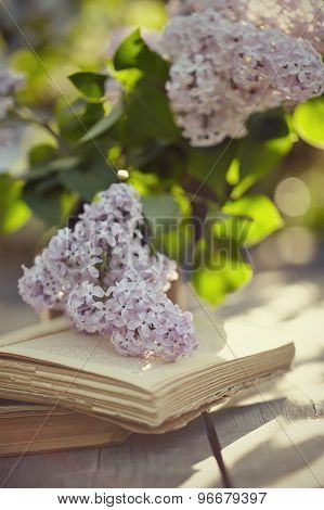 Lilac And Old Books