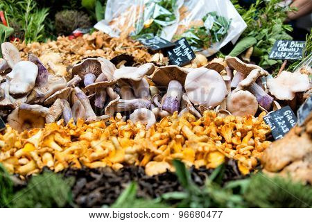 Fresh Chanterelles And Cauliflower Mushroom Exposed In Baskets On The Market