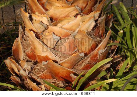 Palm-Tree