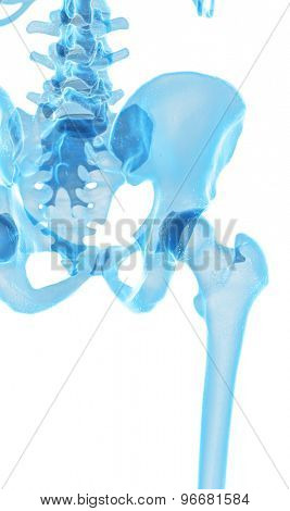 medically accurate illustration of the hip