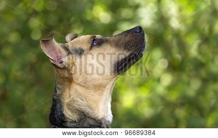 Curious Dog Looking Up
