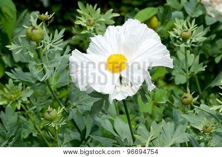 Pua Kala Flowers