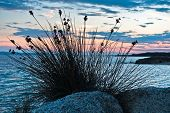 stock photo of dry grass  - Sea rocks and mediterranean dry grass at blue hour after sunset - JPG