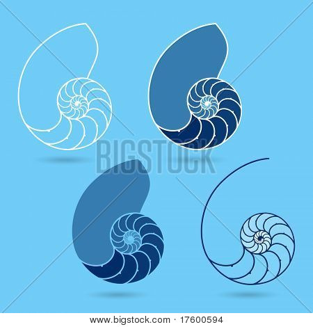 Nautilus shells. Vector.