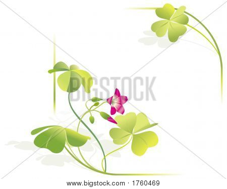 Four-Leaved Clover, Blossom. Frame, Corners, Illustration