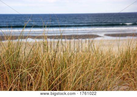 Beach Grass Overlooking The Ocean