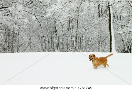 Sam In A Field Of Fresh Snow