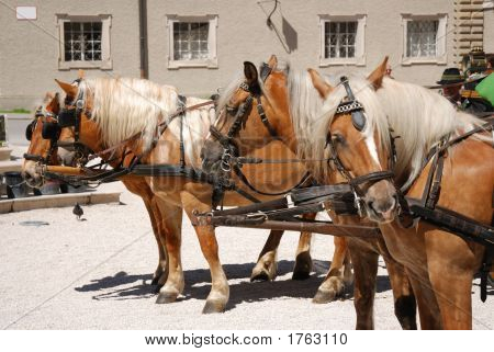 Carriage Horses In Salzburg