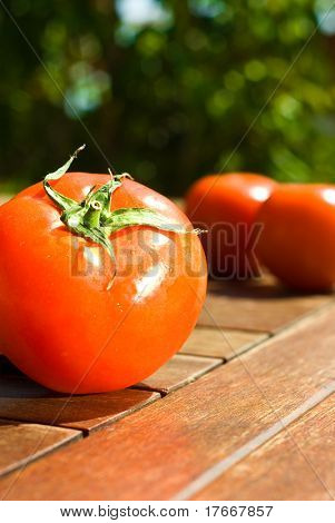 tomatoes on a table on sunny day