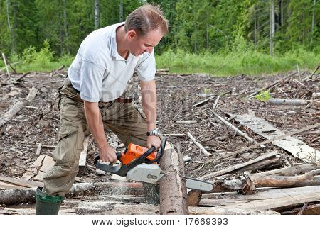 The man in wood saws a tree a chain saw