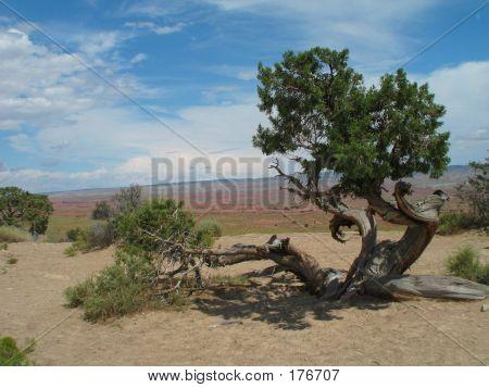 Miyagi Tree