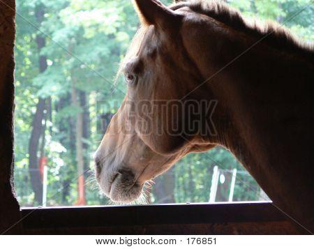 Longing Horse