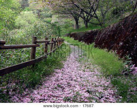 Caminho da Primavera