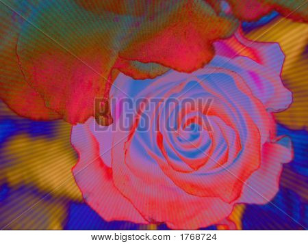 Artistic, Colorful Rose
