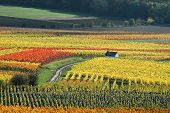 Vineyards In Autumn Colors poster