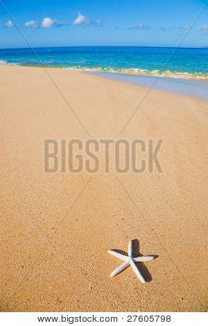 Estrella de mar, conchas en la playa