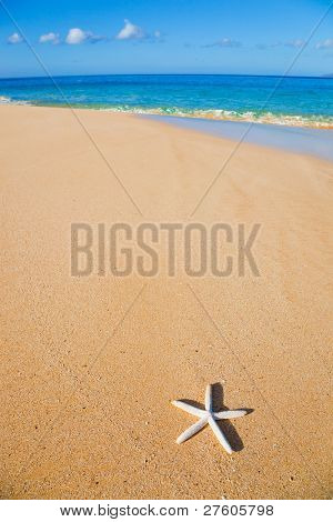 Seestern, Shell on the beach