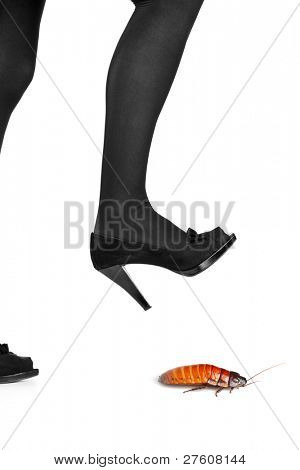 A woman shoe about to step on a cockroach isolated on white background