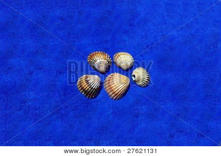 Image Of Seashells