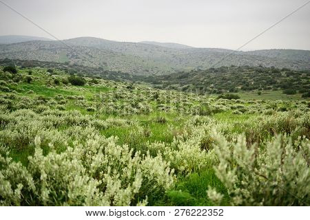 View On Green Biblical Landscape