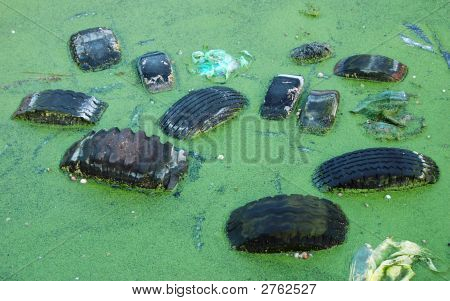 Pollution In Pond