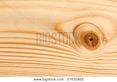 Bitches On A Wooden Board Background