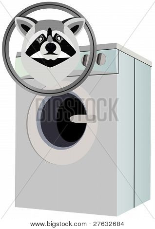 Raccoon and washing machine