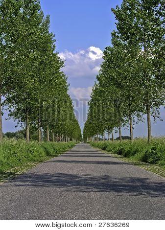 ein sehr niederländische avenue