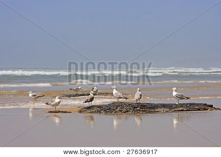 Birds on the rocks near the ocean in Portugal