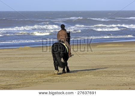 Horseriding at the north sea coast in Holland