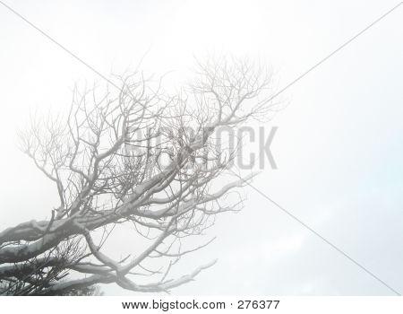 Branch In Mist