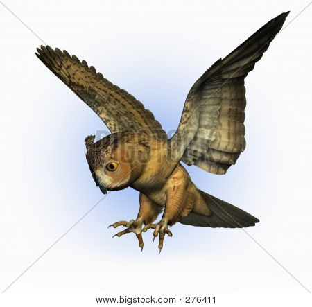 Owl Swooping Down 2