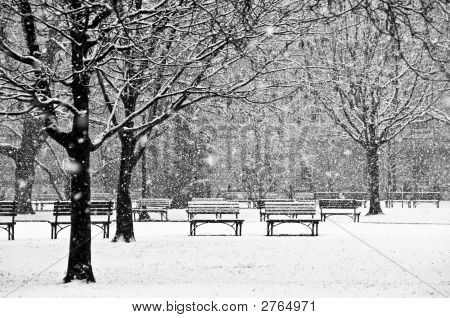 Beautiful, Peaceful Scene Of A Park During A Winter Snow