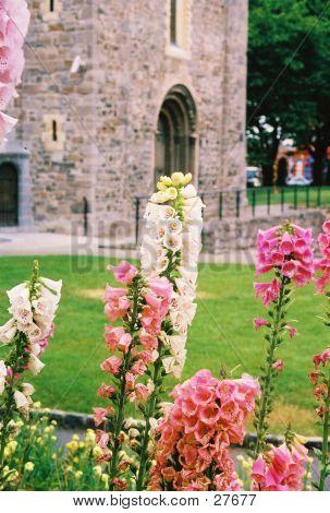 Christ Church Garden