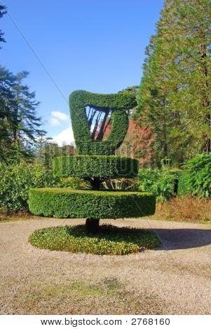 Harp Shaped Bush