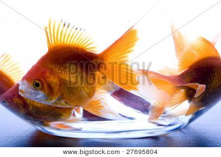Goldfish & Wish