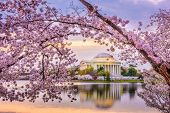 Washington DC, USA at the Jefferson Memorial and Tidal Basin during spring season.  poster