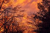 Bare Treetops And Winter Sunset Sky, Amazing Beautiful Cold Season Scenery In Dusk poster