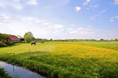 picture of farm-house  - Typical dutch landscape in summertime in the Netherlands - JPG