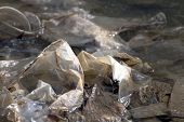 Waste Plastic, Dirty Plastic Bags On The Surface Water, Waste Plastic Bags Do Not Decomposed Garbage poster